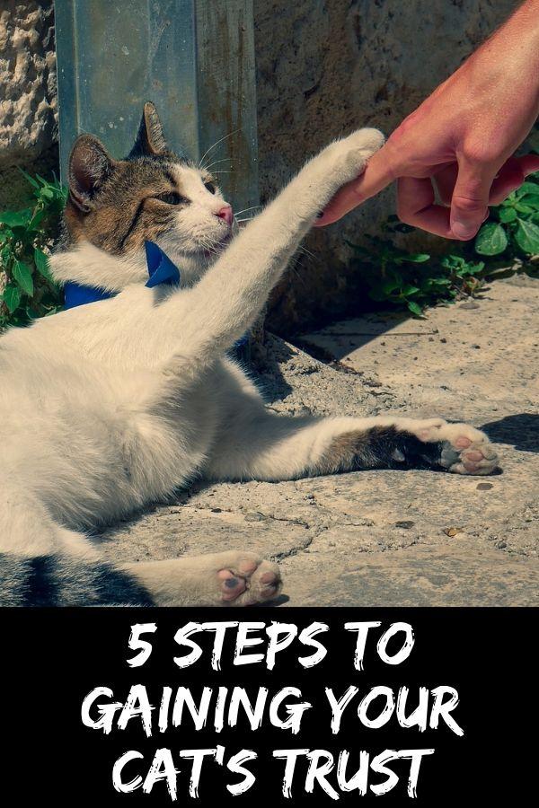 gaining cat's trust