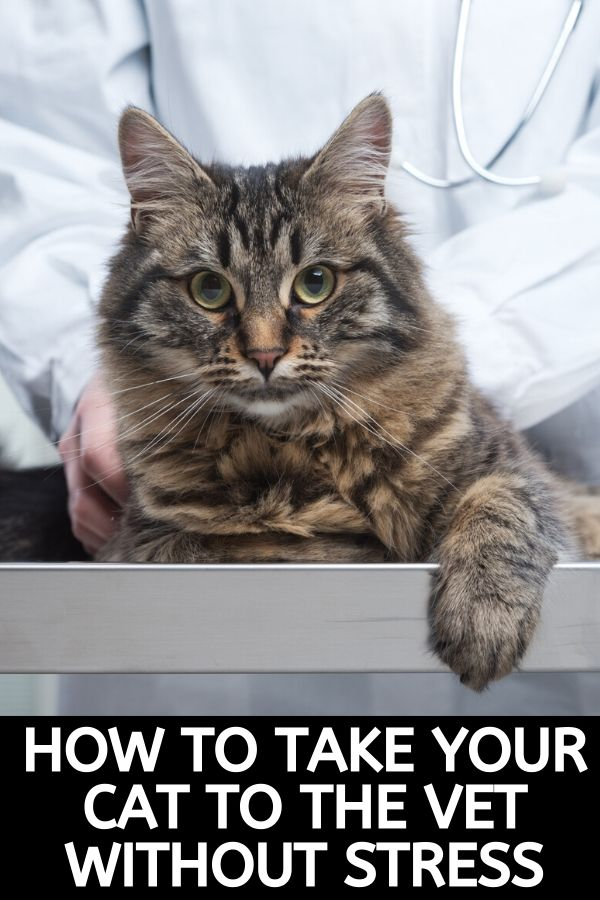take cat to vet without any stress