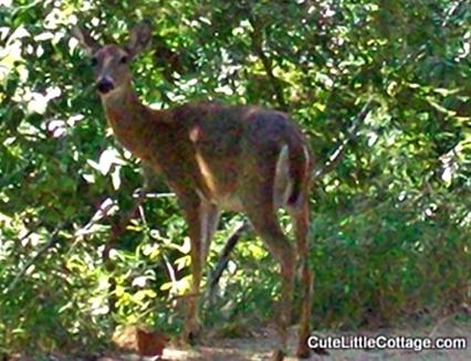 1-Deer habitat2