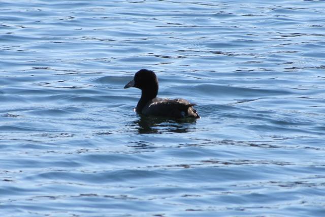 2012 12-04 Beaver Lake Eagles 094