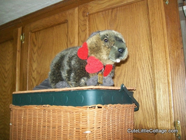 Cute little Beaver Hanging out on the picnic basket in this Beaver Lake Cabin Rental