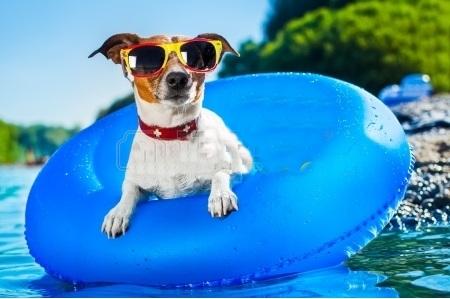 Pet Vacation