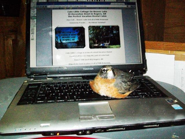 raising baby robin