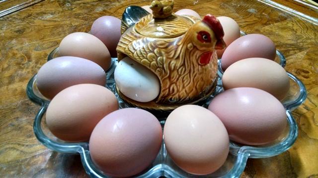 Eggs-Eggs & more EGGS!