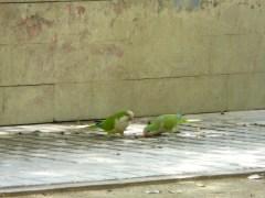 Cute Suite showcase of Barcelona's local fauna