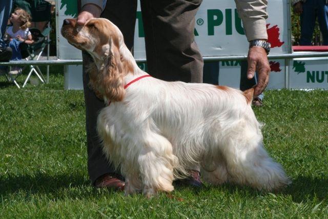 Cocker Spanial Teddy Bear Dog