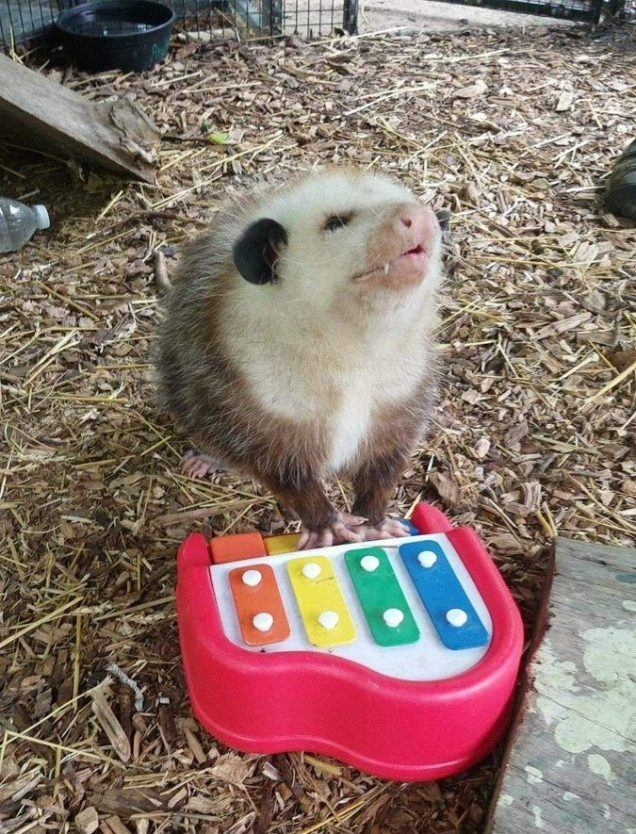 Possum Dearie Sings the Blues – CUTETROPOLIS