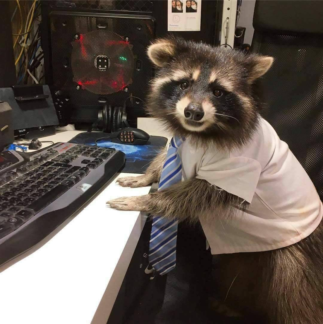 Raccoon Tech Support  CUTETROPOLIS