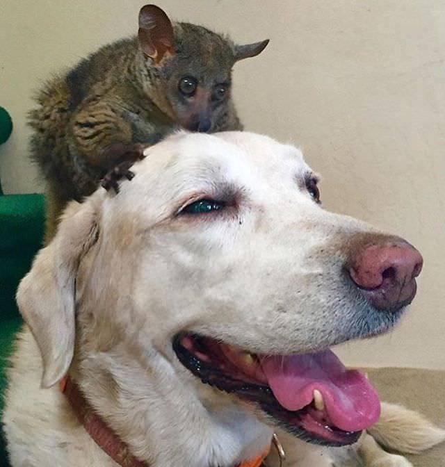 Image Result For Can Dogs Interact