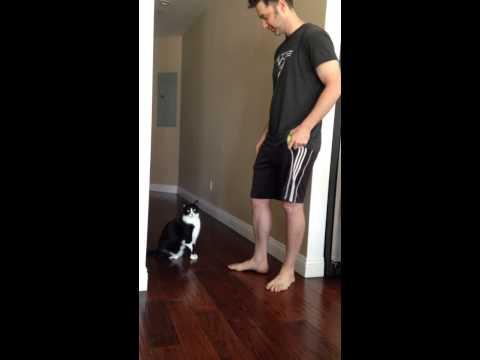 Best Kitty Hug Ever
