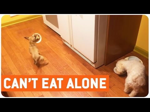 Dog Hates to Eat Alone