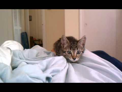 (VIDEO) Cute Kitten Attack