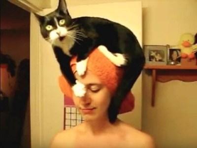 Funny Cat Perch