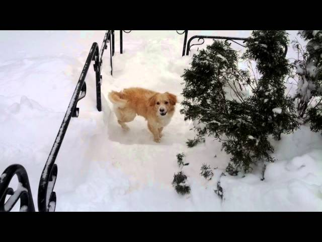 (VIDEO) Too Much Snow for Scooter