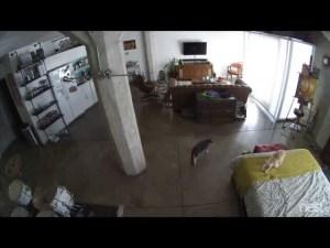 (VIDEO) Cat Shuts Up Dog