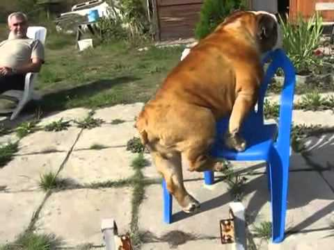 Did That Dog Just Do A Pull-up?