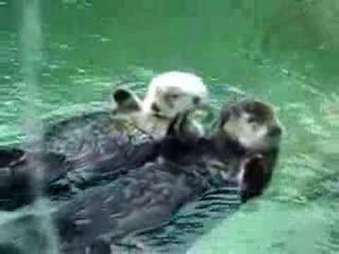 Cute Otters Holding Hands