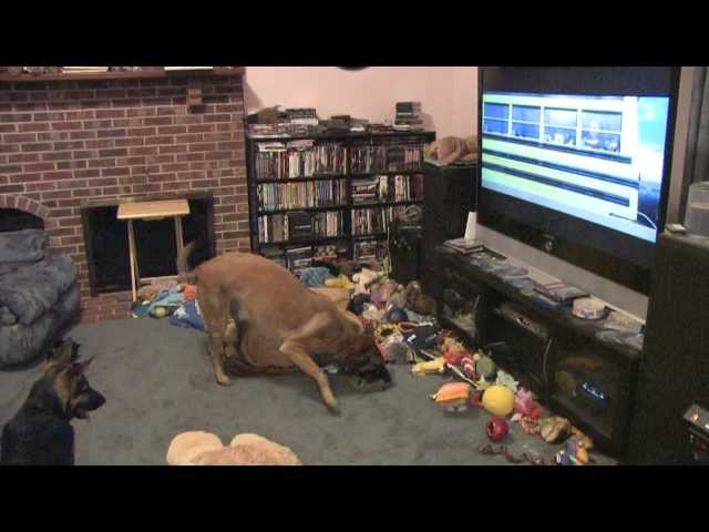 Dog Watching His Favorite Movie - Disney's Bolt