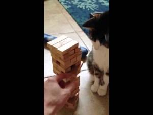 Smart Cat Plays Jenga Game