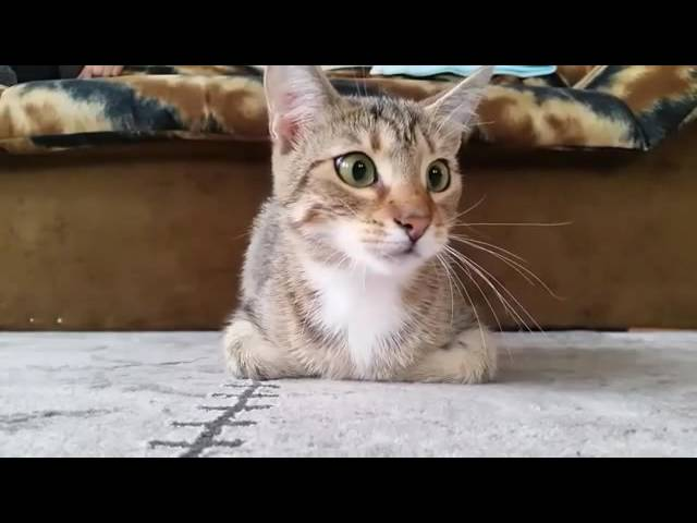 Cute Cat Watching A Horror Movie video