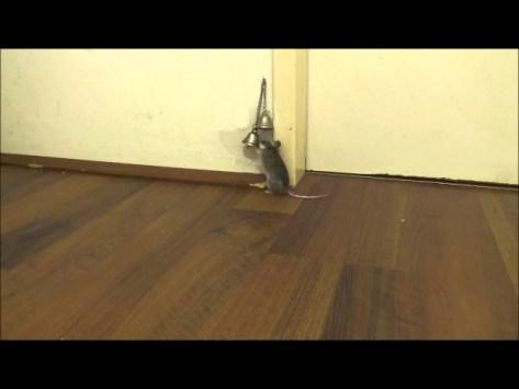 How My Mice Ask Me to Open the Door