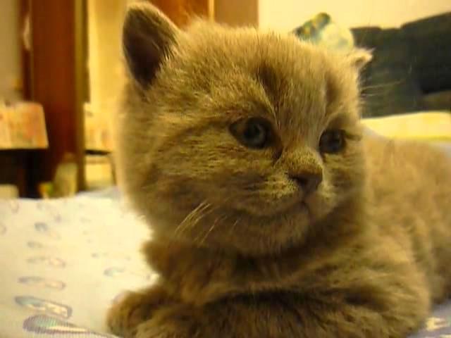 Kitten Suddenly Falls Asleep