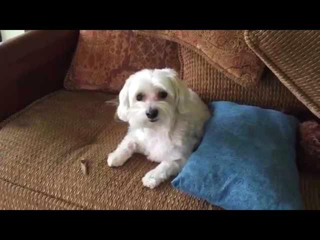 Funny Bad Dog
