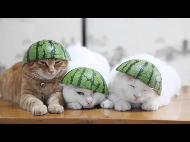 Three Sleepy Cats In Watermelon Hats
