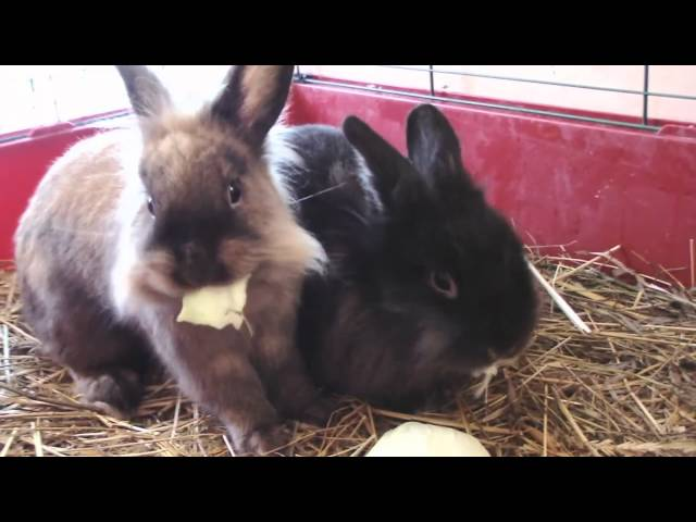 Cute Fuzzy Rabbits Having Breakfast