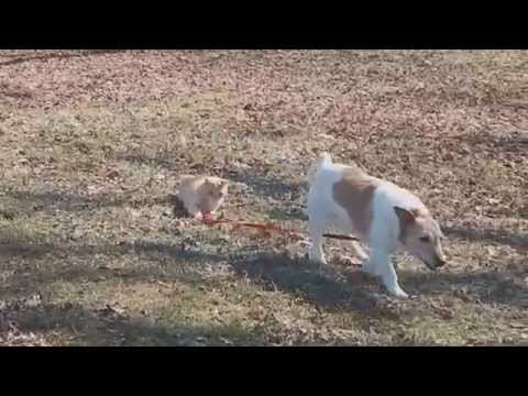 Cat Won't Let Dog Off The Leash
