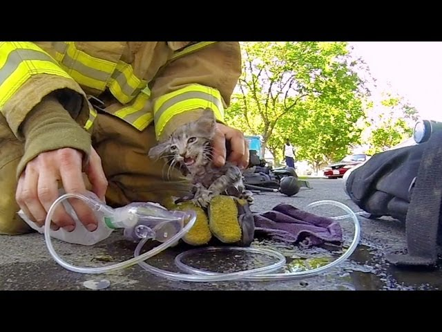 Fireman Saves Kitten