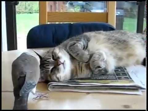 Dove Ruins Cat's Nap