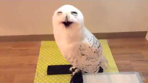 Snowy Owl Appears To Be Smiling at the Man Who Came to Visit Him