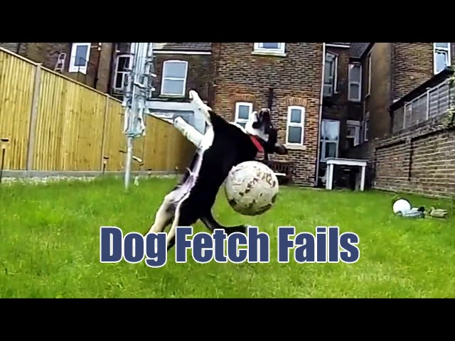Compilation of Dog Fetch Fails