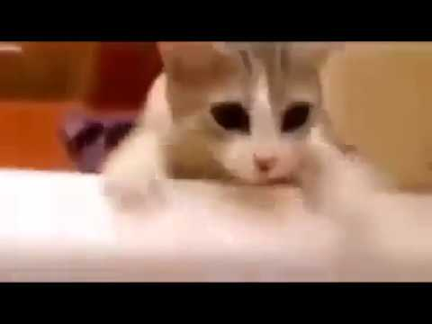 Cat Tries To Save His Human From DROWNING IN THE BATHTUB