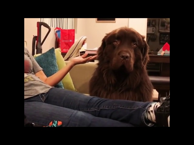 Is it too late to say sorry! Dog is super upset with owner.