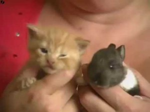 Cat Adopts Baby Rabbit video