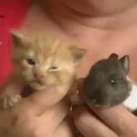 Cat Adopts Baby Rabbit