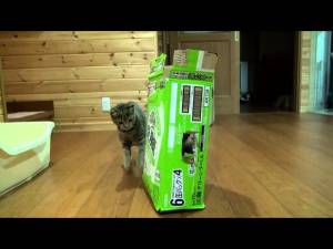 Where is Maru, the Cat? Video