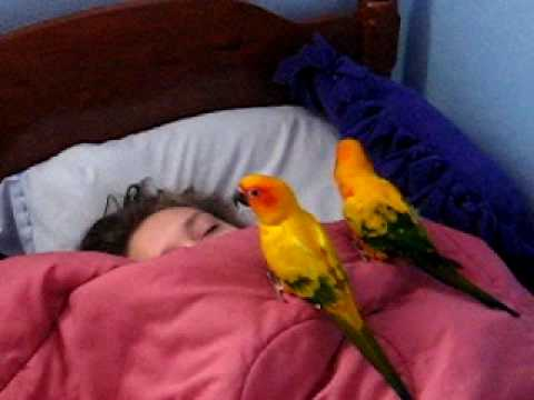 Cute Little Birds Waking Up Their Sister