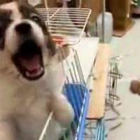 Very Cute Talking Puppy