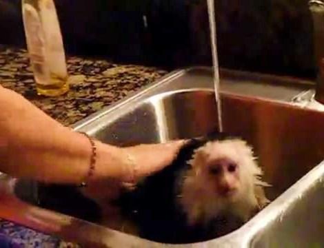 Cute Monkey Showers Just Like Us