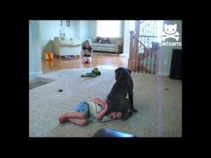 Clueless Canine Squats on Kid's Head Funny dog video