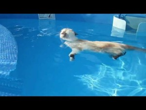 Cute Cat Loves Swimming?!