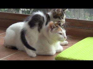 Patient Mother Cat with Crazy Active Kittens