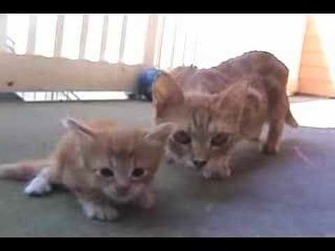 (VIDEO) Mama Cat Comes To Rescue Her Little Kitten