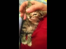 (VIDEO) Tiny Feral Kitten's First Time Being Held by Human