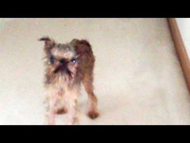Dog's Funny Reaction After A Bath