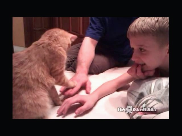 Cat Insists Hands Stay Down