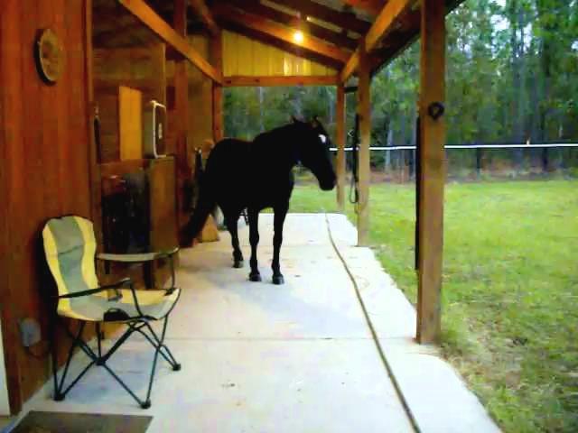 Horse Backing In For Breakfast